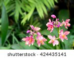 Small photo of Beautiful branch blooming orchid flower in greenhouse garden