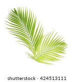 Green Palm Leaves Isolated On...