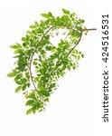 green leaves isolated on white... | Shutterstock . vector #424516531