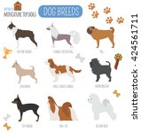 Dog Breeds. Miniature Toy Dog...