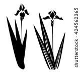 vector illustration of an iris... | Shutterstock .eps vector #424562365