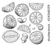 vector hand drawn lime or lemon ... | Shutterstock .eps vector #424568359