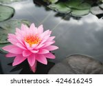beautiful lotus flower | Shutterstock . vector #424616245