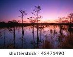 Dawn In Florida Everglades Wit...