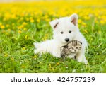 Stock photo cute puppy hugging a kitten on a dandelion field 424757239