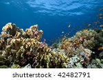 ocean  coral and fish | Shutterstock . vector #42482791