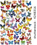 Stock vector lots of different multicolored butterflies vector illustration 4248316