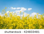 Rapeseed Field With Blue Sky...