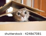Stock photo a cat plays hide and seek in a cardboard box 424867081