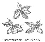 cacao beans engraved vector or... | Shutterstock .eps vector #424892707