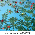flowers lay in a pool of water | Shutterstock . vector #4250074