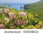 rhododendron schlippenbachii at ... | Shutterstock . vector #425038021