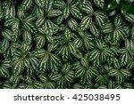 green leaf texture. leaf... | Shutterstock . vector #425038495