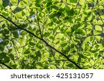 green fresh leaves on a forest... | Shutterstock . vector #425131057