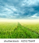 Small photo of Rice fields and cloud sky for background.Rice fields.Rice fields.Rice fields.Rice fields.Rice fields.Rice fields.Rice fields.Rice fields.Rice fields.Rice fields.Rice fields.Rice fields.Rice fields.