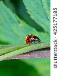 Couple Of Beetles Ladybirds...