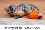Kuril Bobtail Cat Plays With A...