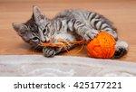 Kuril Bobtail Cat Plays With A...