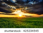 sunset in green field  spring... | Shutterstock . vector #425234545