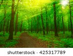 forest with sunlight. the sun... | Shutterstock . vector #425317789