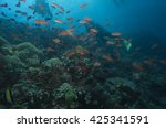 coral reef wall philippines | Shutterstock . vector #425341591