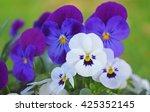 White And Purple Viola Flower ...