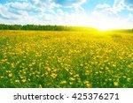 field of spring flowers blue... | Shutterstock . vector #425376271