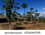 Small photo of Village in Mozambique with papaya trees growing abound houses