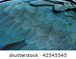 close up of blue and yellow... | Shutterstock . vector #42545545