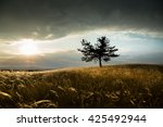 feather grass in light and... | Shutterstock . vector #425492944