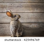 Rabbit On Wooden Background