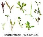 set of watercolor drawing wild... | Shutterstock . vector #425524321