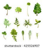 set of watercolor green leaves  ... | Shutterstock . vector #425526907