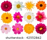 flowers  decorative  collection | Shutterstock . vector #42552862