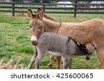 Baby Mini Donkey Feeding From...