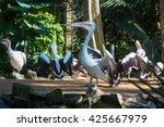 Pelicans In Natural Birds Park...