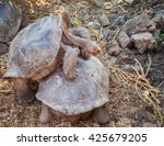 Galapagos Tortoise Is The...