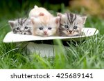 Stock photo portrait of four kittens in a hat on a glade 425689141