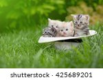 Stock photo four kittens sit in a white hat on a green grass 425689201