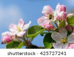 Bee Sitting On An Apple Blossom