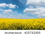 yellow flowering rapeseed field ... | Shutterstock . vector #425732305