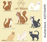 cat breeds  | Shutterstock .eps vector #425743495