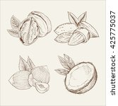 coconut  almond  walnut. vector ... | Shutterstock .eps vector #425775037