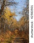 serene winding hiking trail in... | Shutterstock . vector #42583501