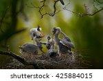 Bird Family In The Nest....