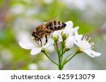bee on white flower collecting... | Shutterstock . vector #425913079