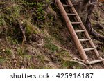Ladder Near Tree Roots