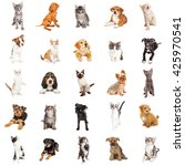 Stock photo large collection of cute puppies and kittens on square white background that can be made into 425970541