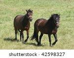 Two Beautiful Brown Horses...