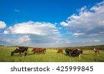 Livestock Grazing During Sunse...